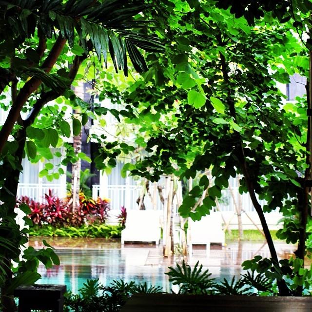 プールサイドの緑がバリ島の風を感じさせてくれる - バリ島インスタグラム