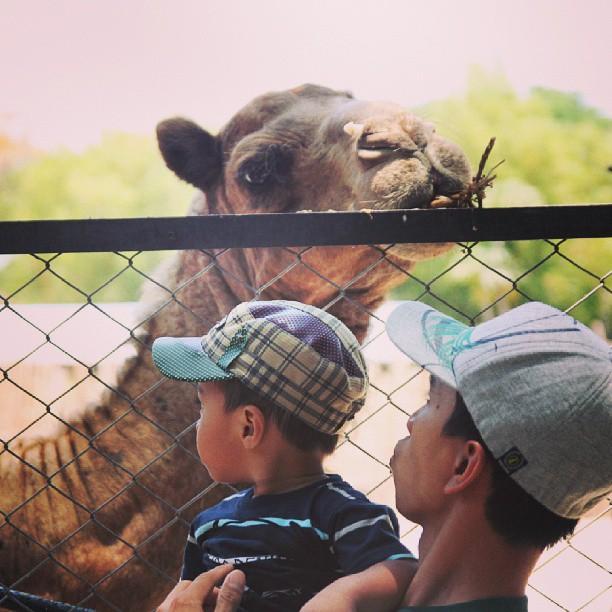 スラバヤ動物園 - バリ島インスタグラム